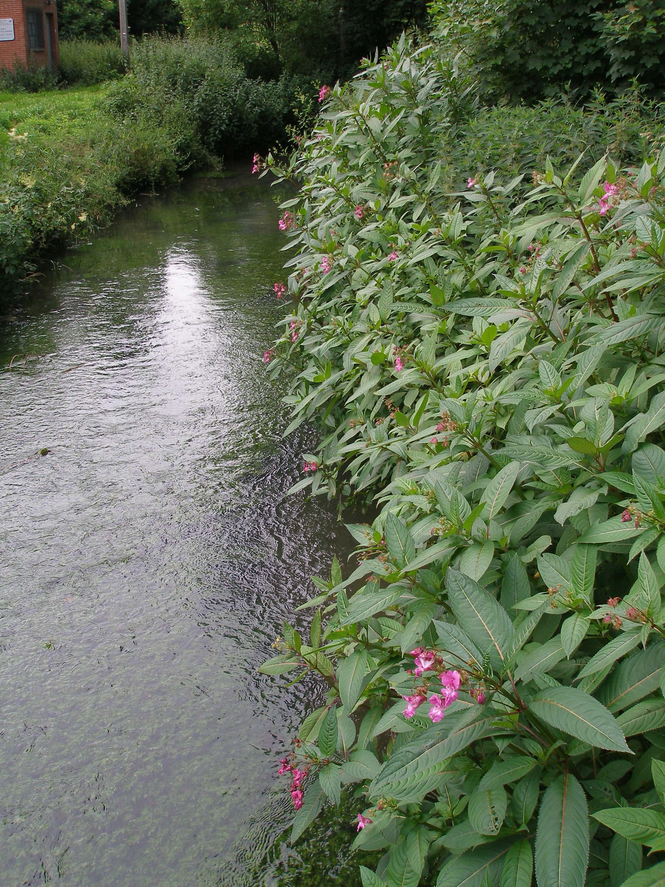 Engagement d'étudiants du 29 juin au 17 juillet 2020  pour le Contrat de Rivière Meuse Aval et affluents (CRMA)